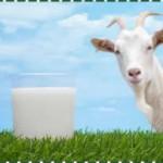 Organik Keçi Sütü